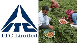 Itc Sets Sights On Contract Farming