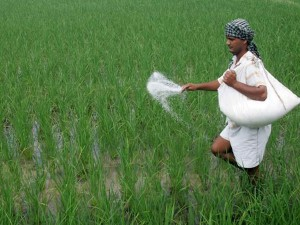 Top Fertilizer Company Share Details As On 04 August